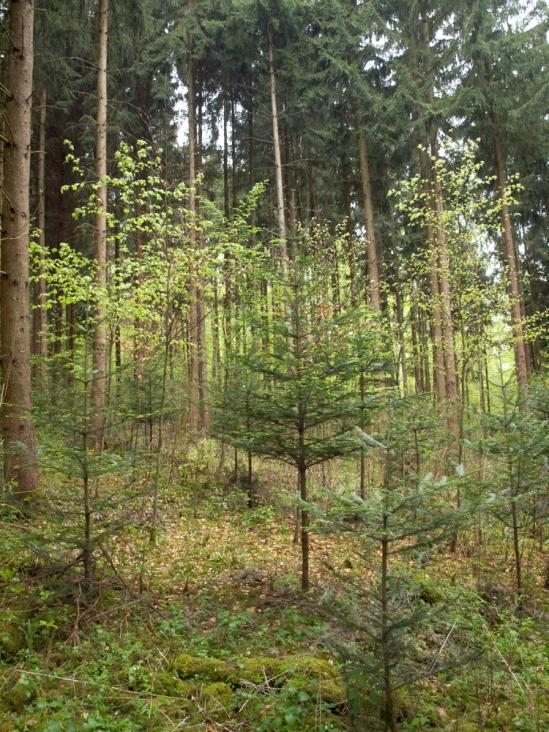 Schwarzgrafenholz
